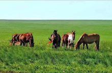 美丽的草原
