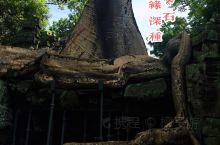 """""""古墓丽影""""与塔布笼寺谁成就了谁? 塔布茏寺为吴哥王朝国王加亚华尔曼七世为他母亲所修建的寺院,兴建于"""