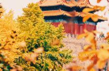 旅行 | 无需预约门票也能拍到故宫银杏!