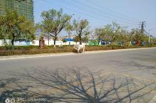瑞丽街头见奇牛