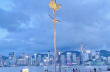 香港打卡!不是小王子也可以拥有一朵玫瑰