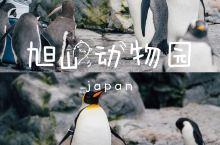 亲子旅行 日本第一站,打卡人气最旺的 旭山动物园    作为亲子旅行最佳的目的地,日本各地有许多特色