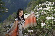 登山赏景,陕西商洛万亩高山杜鹃惊艳绽放