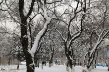 春     雪