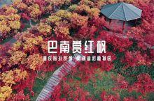 不用去京都,在重庆也能看到红枫林