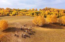 乌兰布统景区位于内蒙古自治区赤峰市克什克腾旗西南部。这里有辽阔的草原、幽静的白桦林、世界珍稀树种沙地