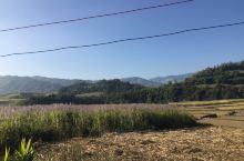 中缅边境的甘蔗花美吗?