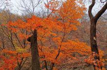 现在对于关门山森林公园也是晚秋,所以没有选择坐车进入,步行相当幸运,入园后边走边看一小时枫叶好美,再
