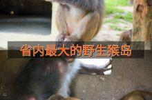 广东省野生猴最多的度假海岛