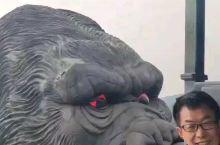 进乐和乐都游乐园第一个项目就是大猩猩,感觉还不错!