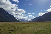 新西兰南岛,自然风景,很多的羊驼