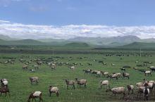 美丽的诺尔丹营地,令人向往的桑科草原