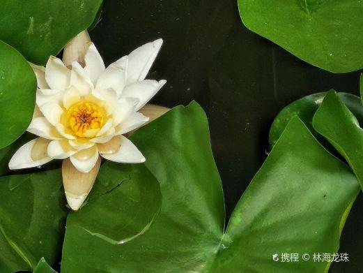 林海龙珠拍摄于undefined