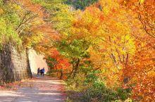 白川乡的红叶景色!