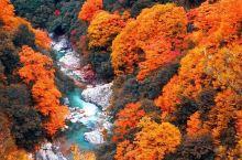 秋天的景色太美了 中国红叶第一山光雾山