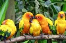 在鸟天堂赏珍禽。