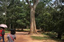 第一次去柬埔寨,就跟朋友直奔吴哥,以前只是听说那里的奇观,刚开始进去感觉像是进入森林一样,没什么特别
