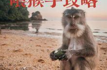 第五集/你们真的知道怎么喂猴子吗?
