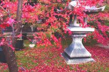 胜林寺的美丽秋景!