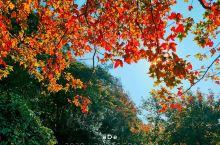 广州周边游,冬日游从化石门国家森林公园