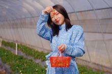 梅州旅游|汉光超顺农旅园,现摘新鲜水果