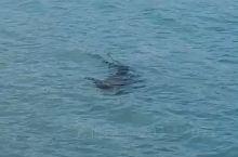 马尔代夫岛边惊现鲨鱼