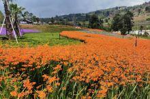 鲜花烂漫的时节来看你,阳山生态公园游记