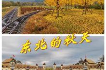 东北赏秋正当时,丹东叆河银杏黄了