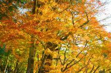 香岚溪的美丽红叶!