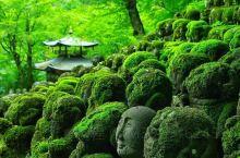 关西新绿名所 - 愛宕念仏寺