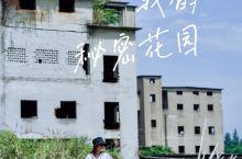 宁波 小众,慈城的紫色花海和废墟小森林