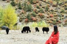 318川藏线,最美风景在路上