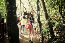 前往普洱太阳河国家公园,感受热带雨林