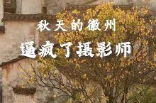 秋天的徽州 逼疯了摄影师#落叶知秋