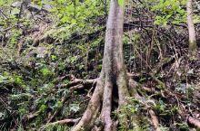 原始森林徒步探险