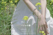 罗平观油菜花指南|油菜花是春天的信使