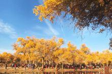 最美的秋天 额济纳旗胡杨林