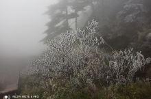 漫山的树林都穿上雪白的圣装