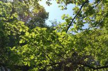 美丽的阳光……温柔的阳光