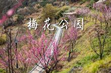 奉化梅花公园|不仅能赏花,还能登山观海