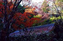 杨谷寺的秋天美景!