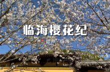 临海樱花纪〡打卡古城里的樱花市集
