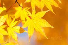 秋天的样子