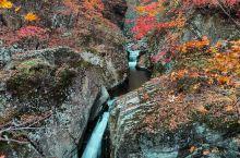 枫叶溪流慢门摄影