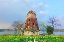 三月赏花季——油菜花海武汉万国公园