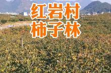 中国月柿之乡