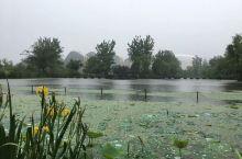 白马湖的花