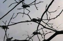 骑单车,尋野鸟