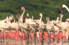火烈鸟最大的栖息地