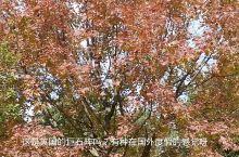 带有浓浓异域风的松江月湖雕塑公园